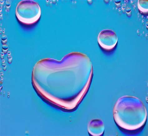 imagenes de rosas sobre agua im 225 genes de corazones con frases de amor con movimiento y