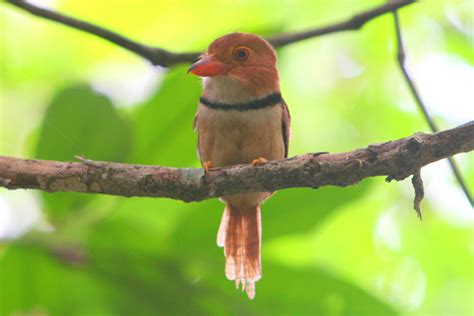 15 new species of birds discovered in the amazon 171 eco facts