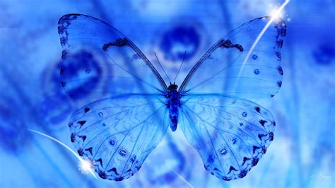wallpaper blue beautiful blue butterfly 3d free desktop wallpapers beautiful