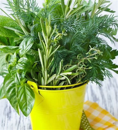 come piantare il basilico in vaso coltivare le piante aromatiche in casa anche in inverno