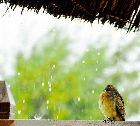 images of love birds in rain love birds kingfisher birds wallpapers collections