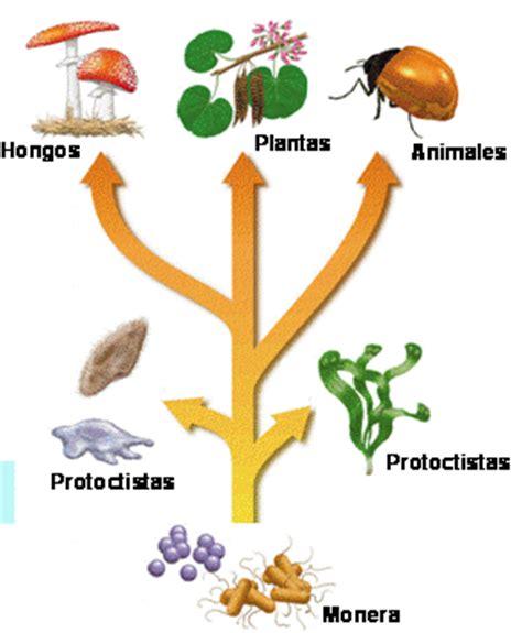 cadenas navarra significado microbiolog 237 a de 2 186 de bachillerato cosas de ciencias