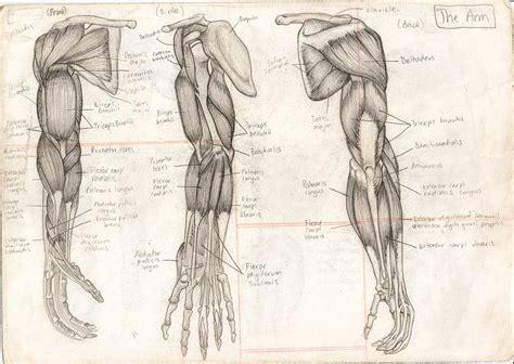 Drawing Human Anatomy by Roka Umetnost