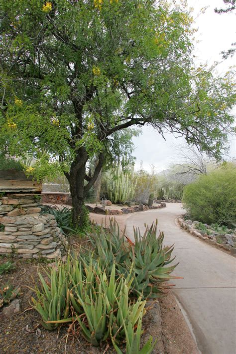 Tempe Botanical Gardens Showup Offers New Discount Passes For Local Attractions In Arizona