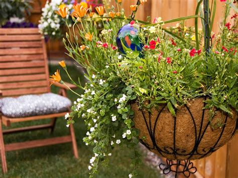 plants  hanging baskets ideas  images