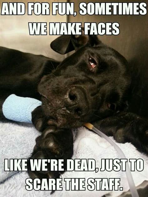 Dog Vet Meme - 249 best images about you know you are a vet tech when on pinterest