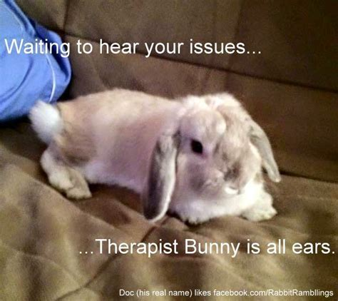 Rabbit Meme - rabbit ramblings funny bunny memes