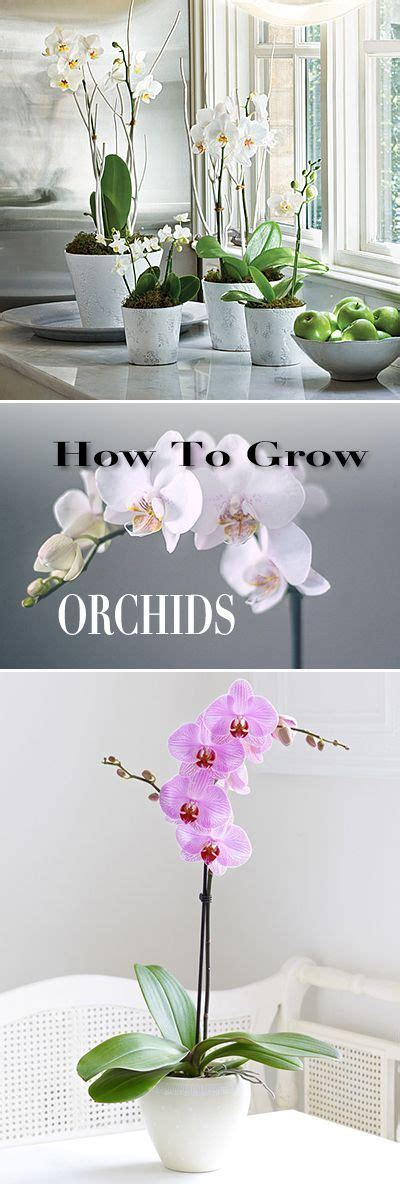 growing orchids successful gardening indoors and out an illustrated encyclopedia and practical gardening guide books 2800 best images about outdoors indoors garden on