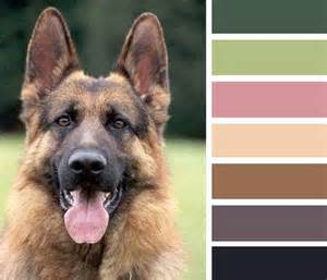 german shepherd color chart german shepherd colors german shepherds