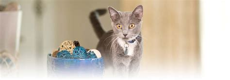 alimenti gatti alimenti per gatti