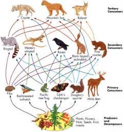tapir life cycle diagram tapir free engine image for