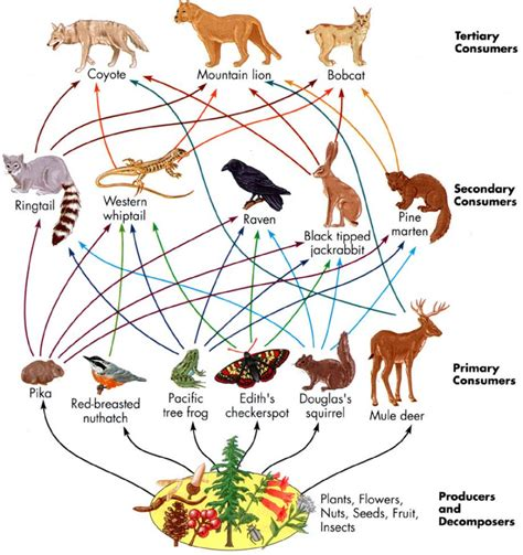 forest food chain diagram tapir cycle diagram tapir free engine image for