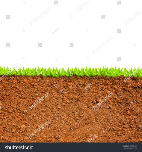 soil section cross section of grass and soil against white background