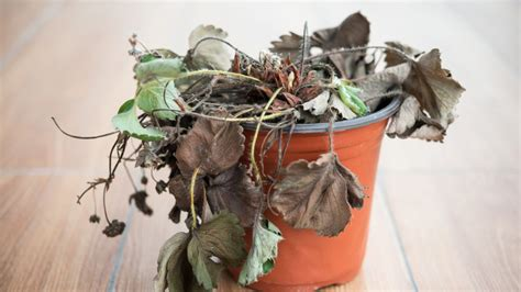 how to bring a dead plant back to life swap out these 7 things in your house for a new lease on