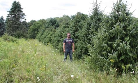 pictures on christmas tree farms buffalo ny easy diy