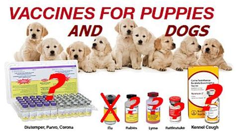 how many vaccinations do puppies need vaccinations and puppy vaccinations mygermanshepherd org