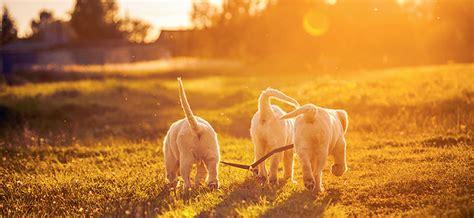 the dog house rochester ny dog walking rochester ny