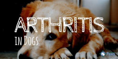 arthritis in dogs arthritis in dogs symptoms causes treatments and medications