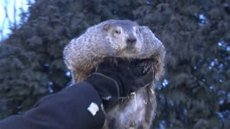 the groundhog day groundhog day punxsutawney phil predicts 6 more weeks of