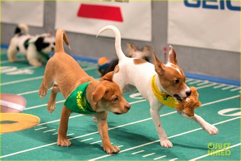 puppy bowl 2017 puppy bowl 2017 meet the dogs the more photo 3853436 2017