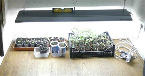 fluorescent light for seedlings lighting for seedlings lighting ideas