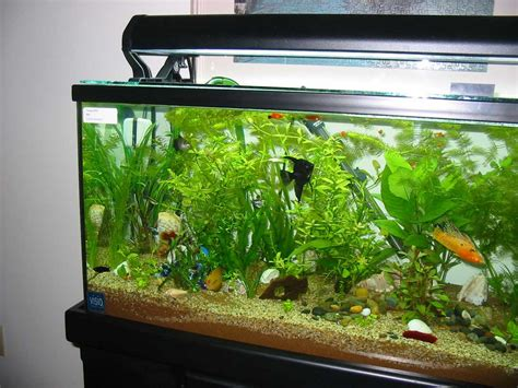 aquarium for home aquarium designs to suit your home ideas 4 homes