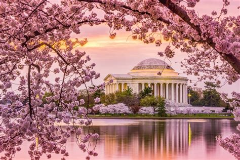 washington dc 2018 one trip travel guide books washington dc cherry blossom photo adventure vacation