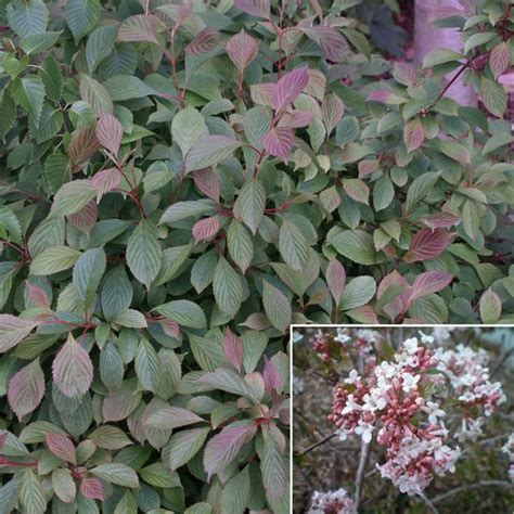 fragrant shade plants 1000 images about shrubs shade on gardens