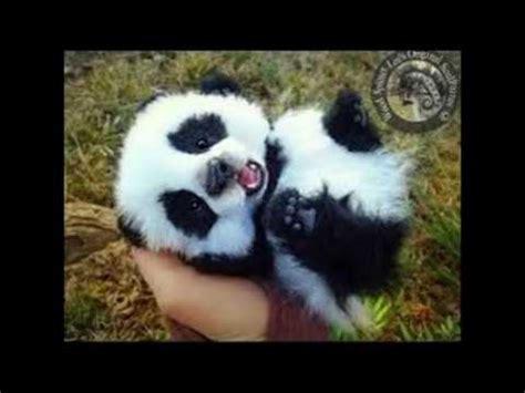 imagenes mas kawaii los animales mas kawaii del mundo youtube