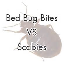 bed bug bites vs scabies learn the difference