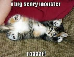 The Best of LOL Cats (15 pics) - Izismile.com Bestofcats