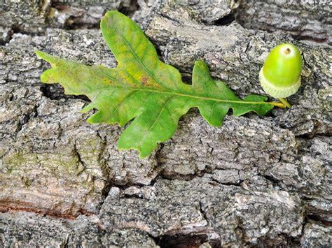 Zimt Gegen Pilze Im Garten by Rindentee