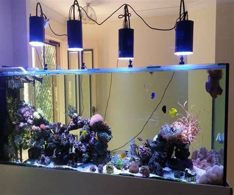 iluminacion de peceras guia de iluminacion para acuarios marinos plantados