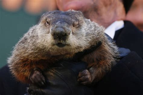 groundhog day define groundhog day s punxsutawney phil might get prediction