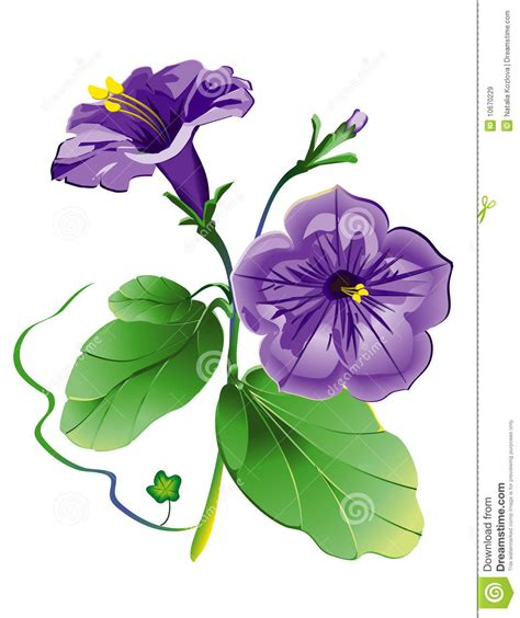 petunia flower model with eps file royalty free stock