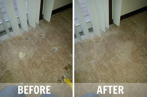 rug repair cost 2017 carpet repair cost calculator carpet repair morgantown wv floor matttroy batavia carpet