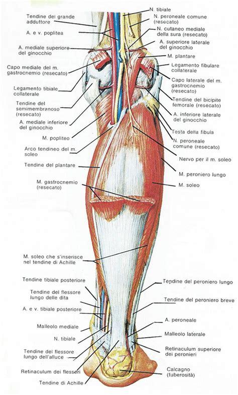 dolore polpaccio interno lesioni della gamba