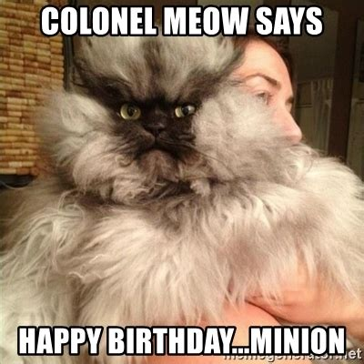 Colonel Meow Memes - colonel meow says happy birthday minion colonel meow