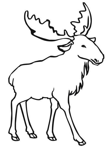 bull elk coloring pages download and print for free