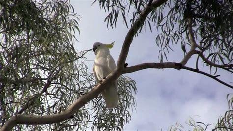 birds in my backyard birds in my backyard youtube