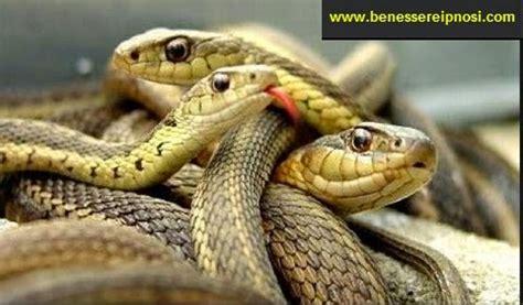 serpente volante sognare serpenti o vipere conosci il significato reale di