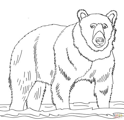 brown bear stands in shallow water coloring page free