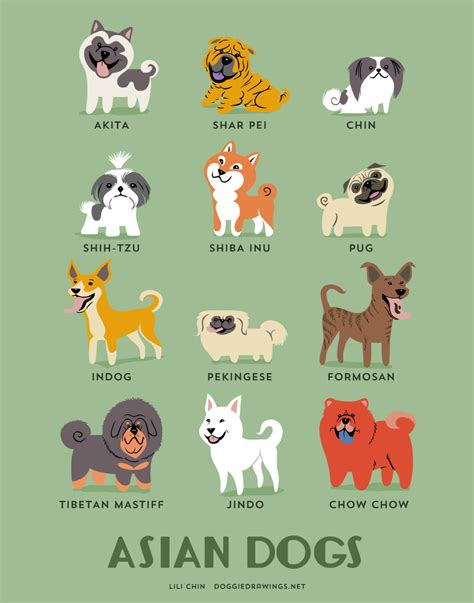 dog breeds print asian dogs art print dog breeds from asia