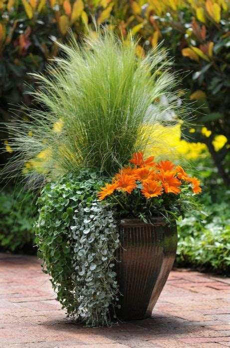 pot gardening ideas 17 best ideas about plants around pool on pool