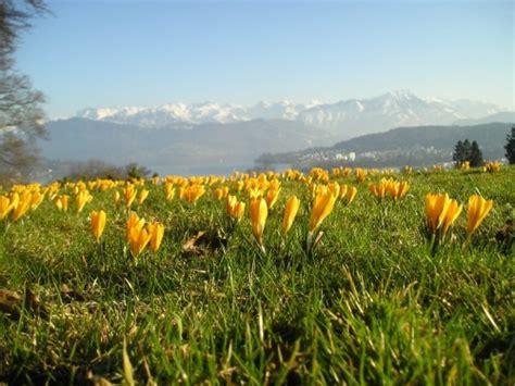 panorama fiori belluno panorama tra fiori e neve