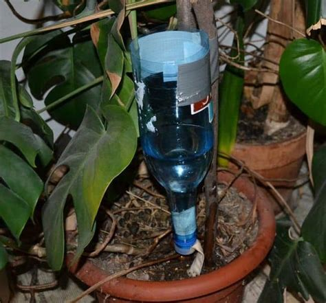 diy drip irrigation system for container gardening buddy how to build diy drip irrigation system for potted plants