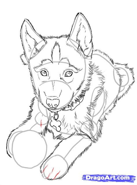 how to draw a husky puppy how to draw huskies draw a husky step by step pets animals free drawing