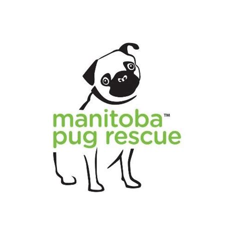 pug rescue winnipeg manitoba pug rescue mbpugrescue