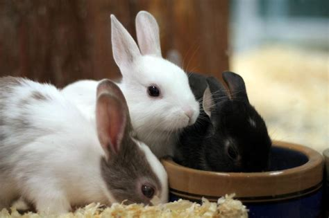 how to a pet how to take care of a rabbit slideshow