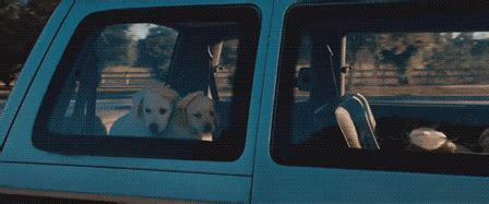 bridesmaids puppy mccarthy bridesmaids gif find on giphy